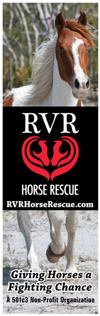 graphic-design-banner-tampa-horse-rescue